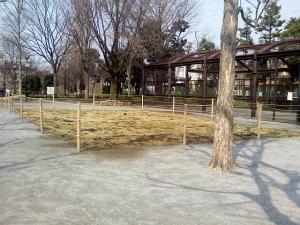 3月16日の中庭