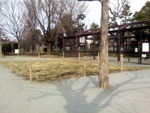 3月18日の中庭