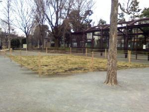 3月19日の中庭