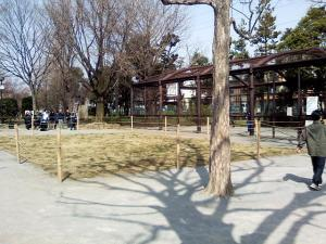 3月20日の中庭