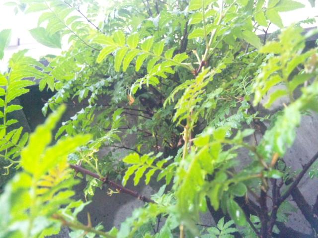 裏庭の葉っぱ
