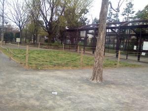 4月11日の中庭