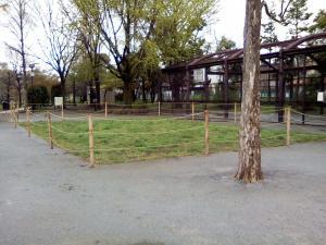 4月16日の中庭