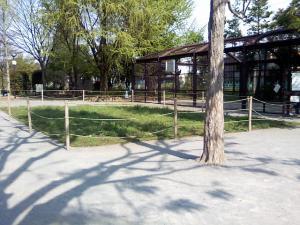 4月26日の中庭