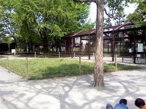 5月5日の中庭