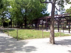 5月9日の中庭