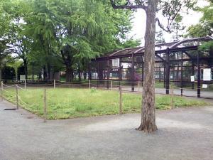 5月11日の中庭