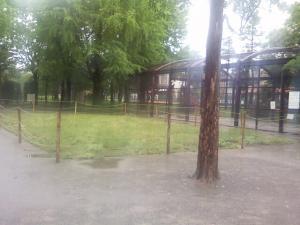 5月12日の中庭