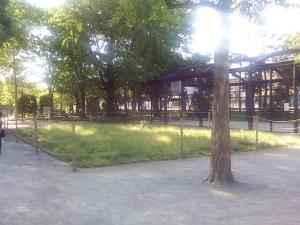 5月17日の中庭