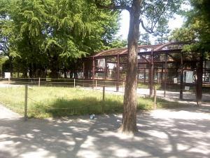5月18日の中庭