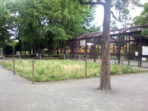 5月29日の中庭