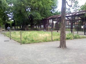 5月30日の中庭