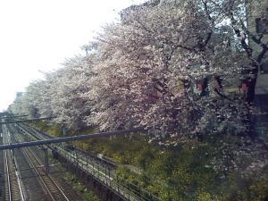 東中野、総武線沿いの土手