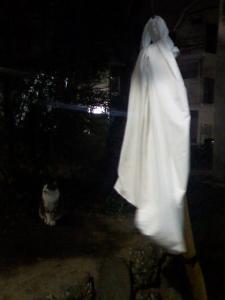 ネコと幽霊