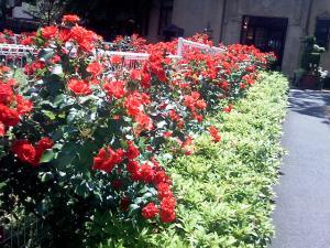 小笠原伯爵邸の薔薇