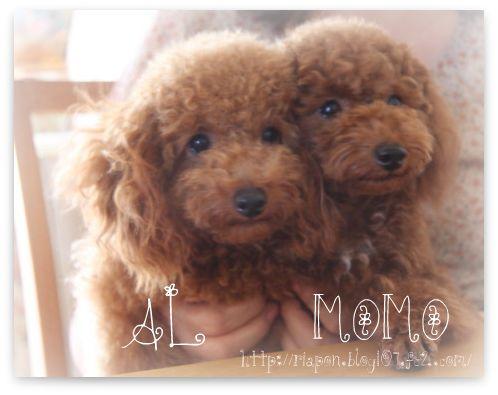 al  momo