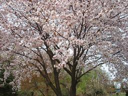 コピー ~ 2009.5.16  北湯沢温泉 002