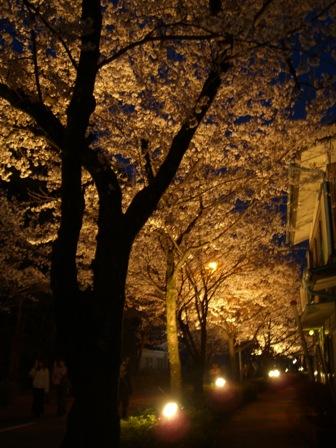 「桜のトンネル」とも言われる、北桜通りのライトアップ。2006年は4/16までやってます。土曜は地元のお祭りも行われ、ほのぼのムードでした