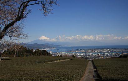 日本平からの富士山-1