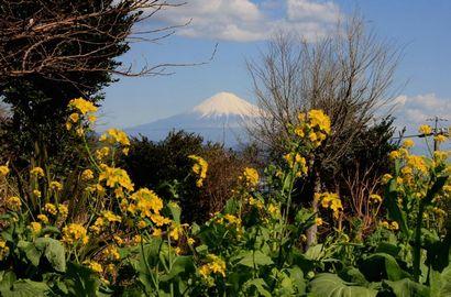 日本平からの富士山-3