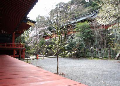 浅間神社の桜-1