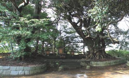 清水山公園・谷津山-9