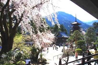 久遠寺の桜-1