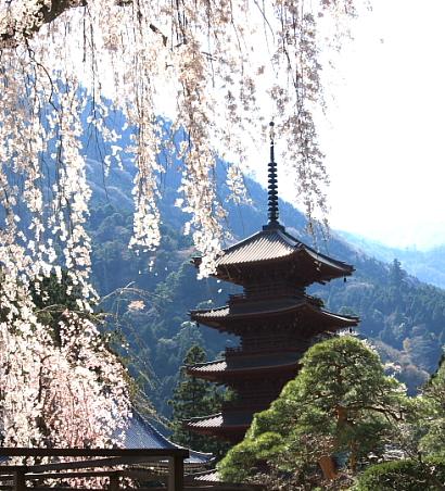 久遠寺の桜-3