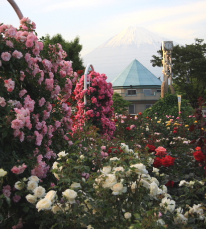 富士中央公園-4