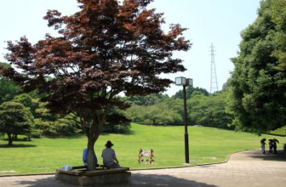 岩本山公園紫陽花1