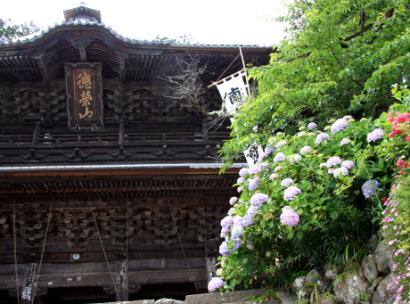 紫陽花寺-1