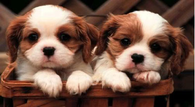 cute-puppies.jpg