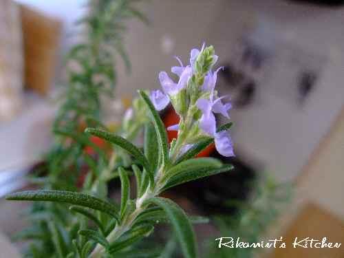 DSCF10・2ローズマリーのお花