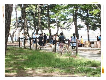 野島-16