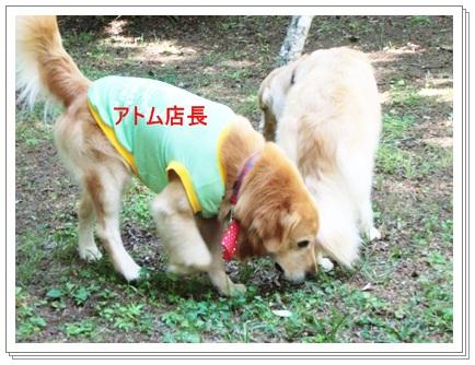 3連休woofラン-8