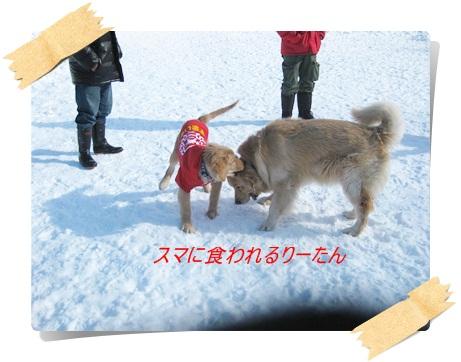 雪のわふ5