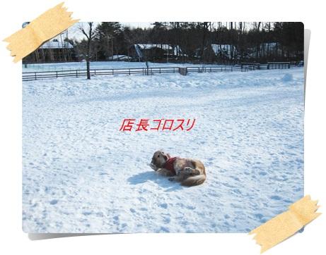 雪のわふ4