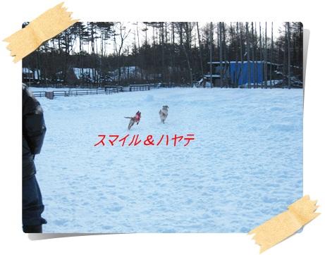雪のわふ2