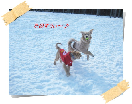 雪んのわふ3