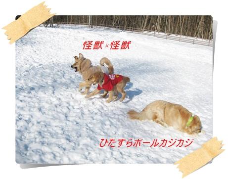 雪のわふ9