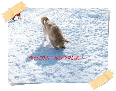 雪のわふ7