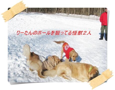 雪のわふ8