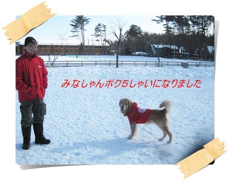 雪のわふ6