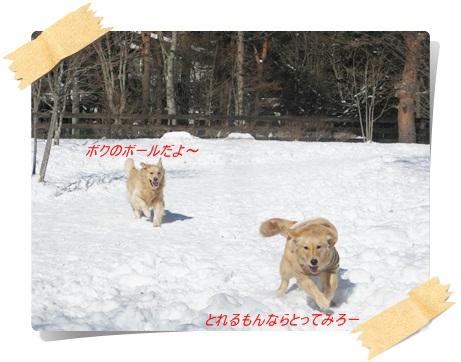 雪のわふ15