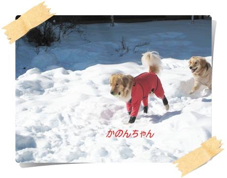 雪のわふ19