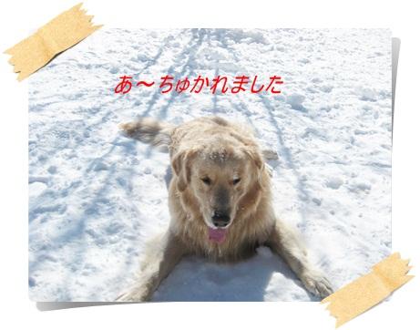 雪のわふ16