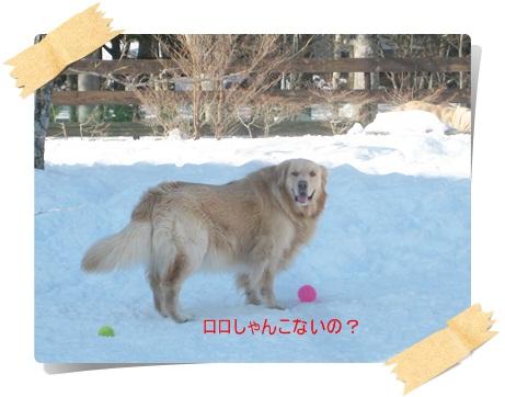 わふ雪10
