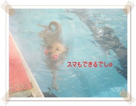 もやのプール4