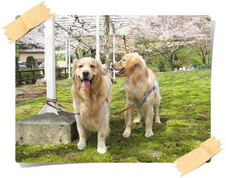 ふきやま公園3