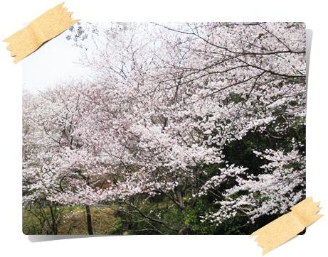 ふじやま公園1